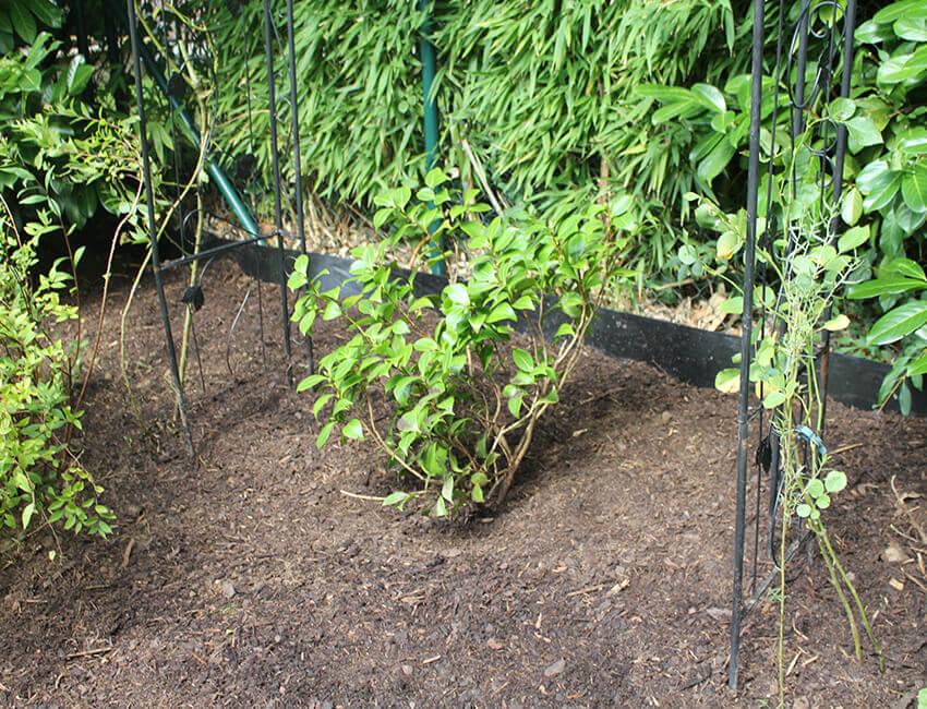 Erdarbeiten in einem Garten