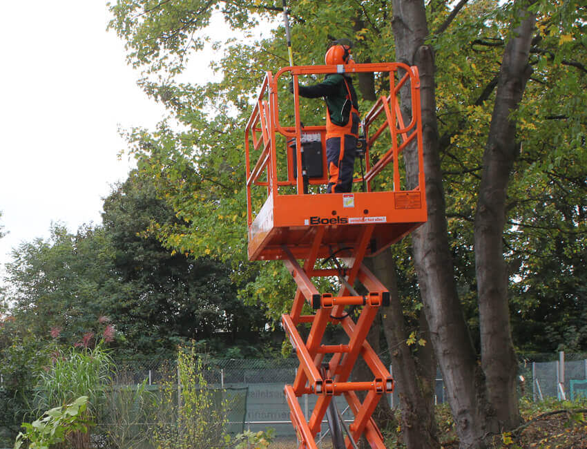 Baumarbeiten, Baumpflege