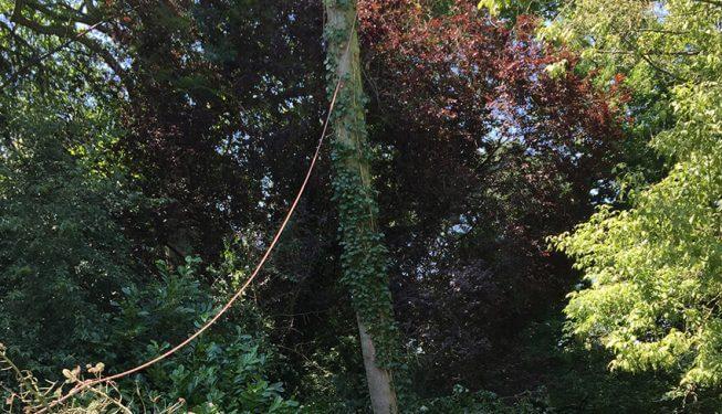 Baumfällung, Baum kippt um